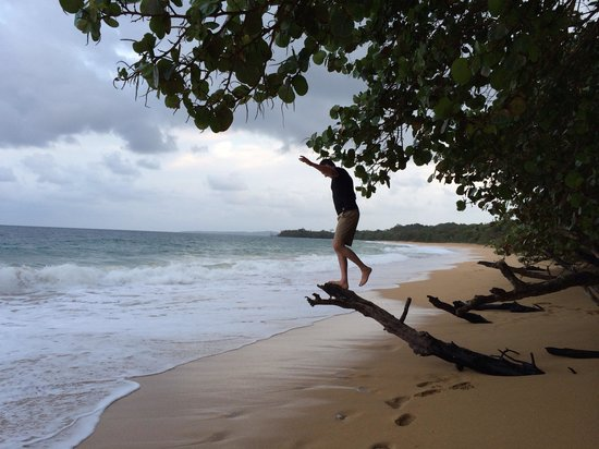 Bluff Beach Retreat: Climbing trees