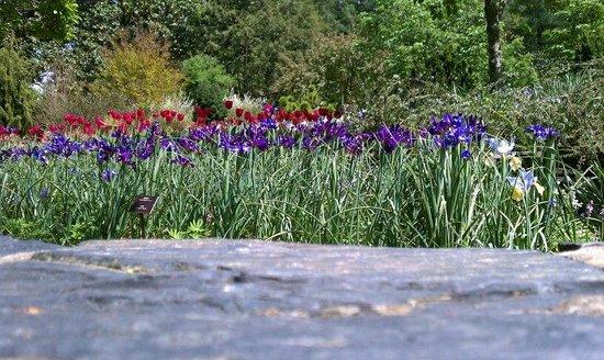 Sarah P. Duke Gardens : Gardens