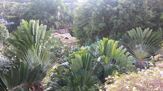 Anantara Riverside Bangkok Resort: Pool vue d'en haut
