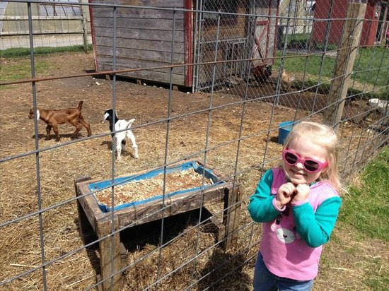 Mullica Hill, NJ: Animals to see