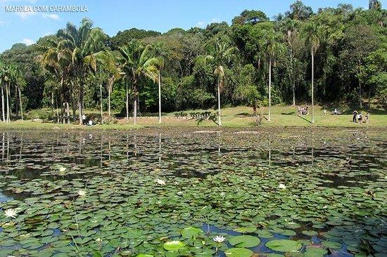 Jardim Botânico de São Paulo : Lago das Ninféias