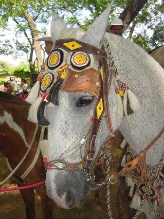 Casagua Horses Tours: Traditional  Costa Rica tack