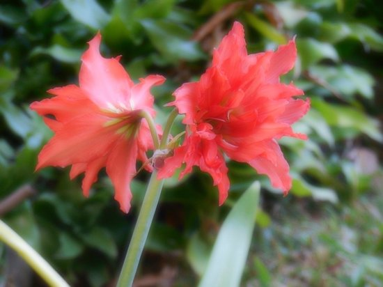 Ceiba Country Inn: there are lot of flowers