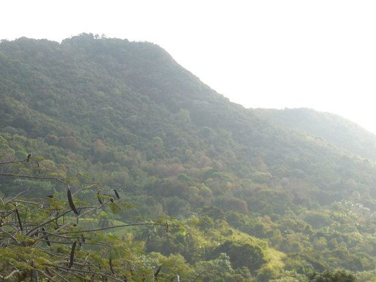 Ceiba Country Inn: view
