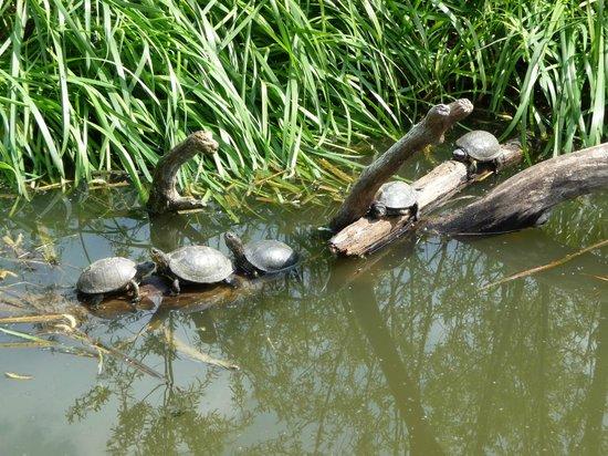 Parc Animalier de Sainte-Croix : tortues