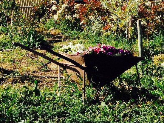 Agriturismo Azzurra Biricchina: Fiorellini