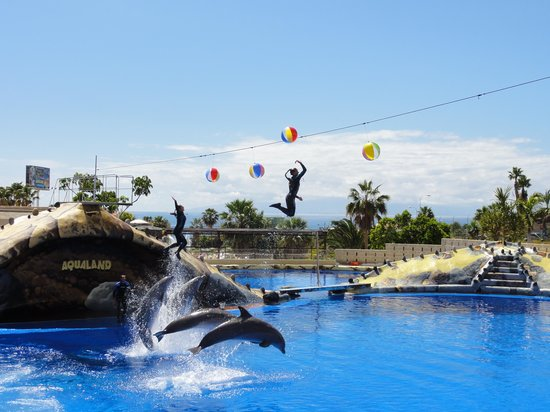 Fanabe Costa Sur Hotel: Dolphin show at Aqualand - amazing!