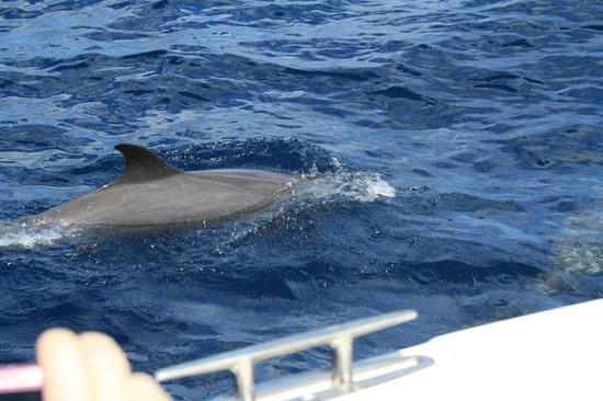 Carayou Hotel & Spa: Découverte  des  dauphins  ...