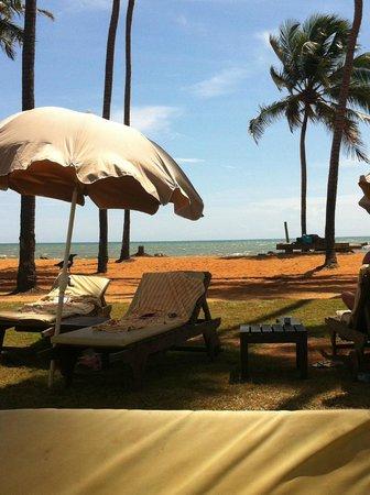 Club Hotel Dolphin : beach