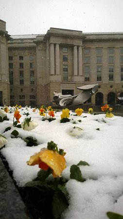 JW Marriott Washington, DC: Snow flowers