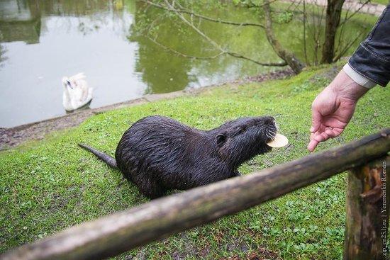 Rivne Zoo: 3