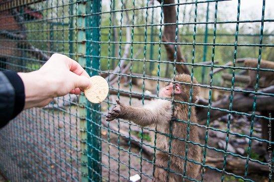 Rivne Zoo: Обезьянки очень рады нам