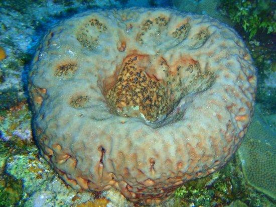 Tobago Dive Experience: Nice