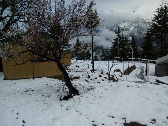 The Monk-Kalpa: Apple trees
