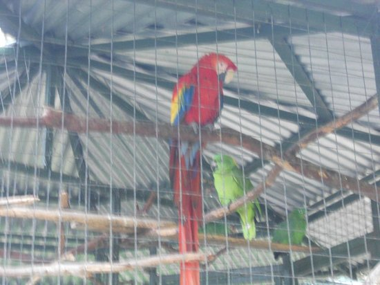 Toucan Rescue Ranch: In addition to Toucans are Parrots