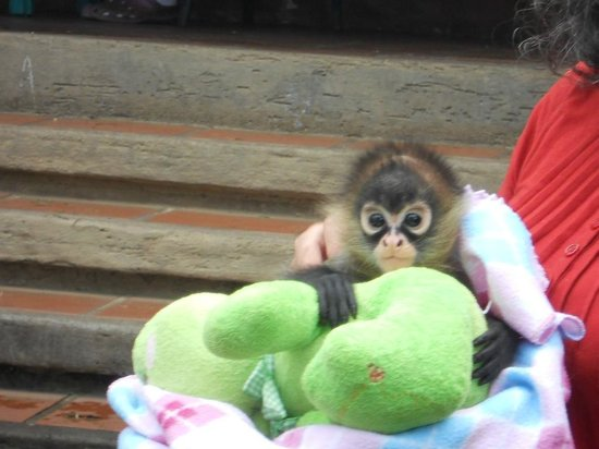 Toucan Rescue Ranch: Cutest Spider Monkey ever