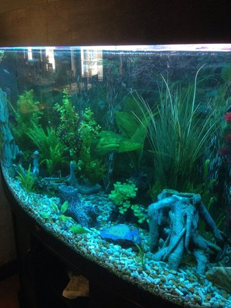 The Carpenters Arms: Amazing fish tank in the entrance. Nice to sit and watch.