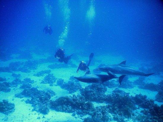 Scuba Hurghada Diving Center : Duiken met dolfijnen, foto gemaakt door Sayed