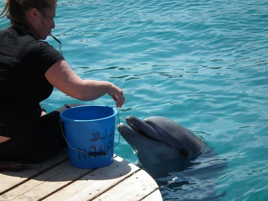 Dolphin Reef : feeding point