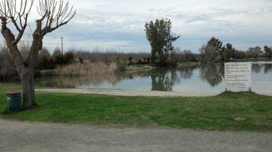 Picture Of Lake Minden RV Resort