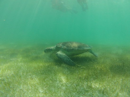 Akumal Dive Shop : Rencontre avec une tortue