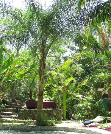 La Tropicale Beach Lodge: Autour de la piscine