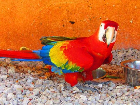 VIK Hotel Arena Blanca : Parrot in Cayena
