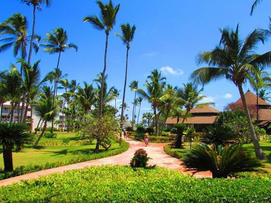 VIK Hotel Arena Blanca : Resort