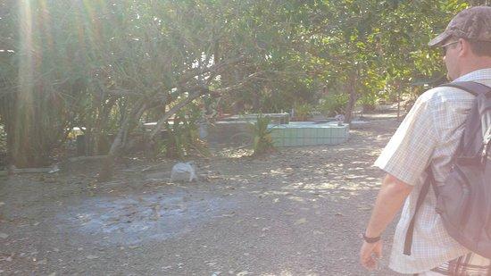 Isla de Cabuya : walking around the graveyard
