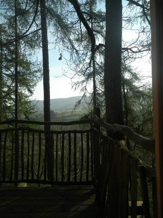 Living-Room Treehouses: the view from the loo in Gwdy Hw!