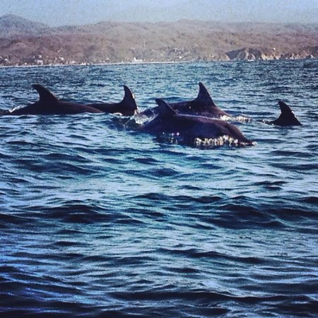 Posada las Mazuntinas: Dolphins seen from turtle swim/whale watch tour