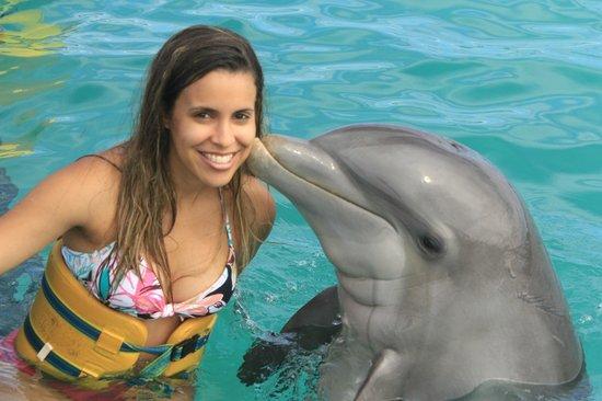 Dolphin Island : Inesquecível!