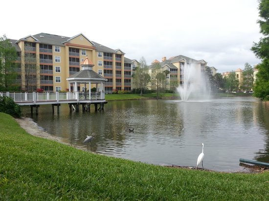 Sheraton Vistana Resort Villas- Lake Buena Vista : The Cascades Section
