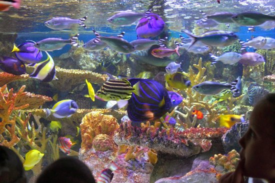 Poissons Picture Of New England Aquarium Boston Tripadvisor