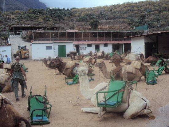 Camel Park Arteara: Camel park