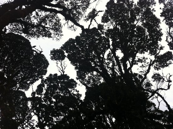 Mossy Forest: Looked up