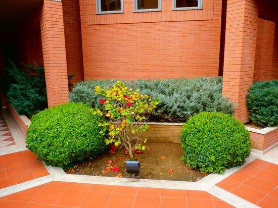 Best Western Hotel I Triangoli: some plants...