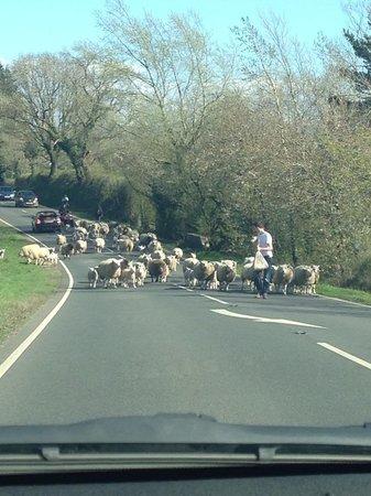 The Old Croft House Vegetarian B&B on Isle of Skye: The biggest traffic jam you'll see!