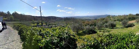 Castello d'Albola: chianti