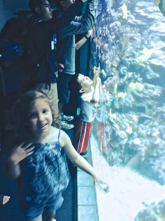kids love the Maui Ocean Center!