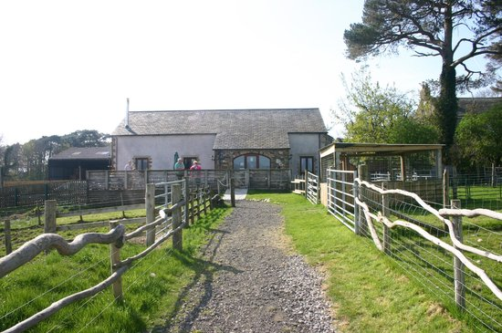 Wellington Farm Cafe & Tearooms: The cafe from the animal enclosure