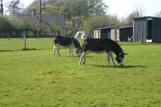 Wellington Farm Cafe & Tearooms: The donkeys