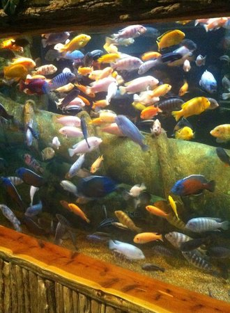 Oklahoma Aquarium : Fish