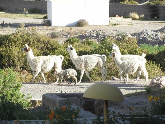 Hotel Las Vicunas : Traffic in street fronting hotel.