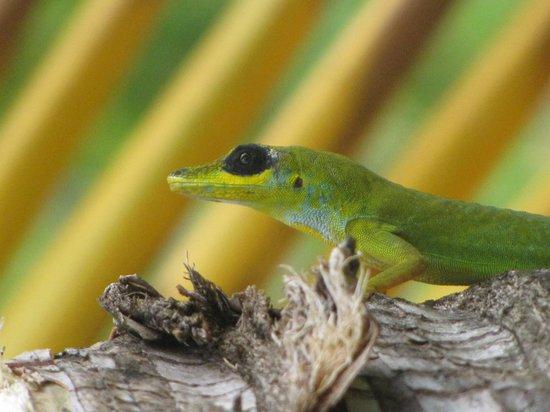 Botanical Gardens: Lizard