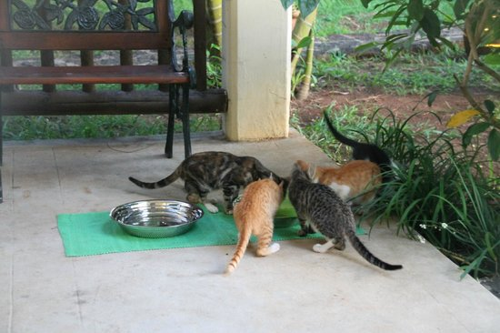 Hibiscus Beach Resort & Spa: Starving ferals telling others to come and eat as well