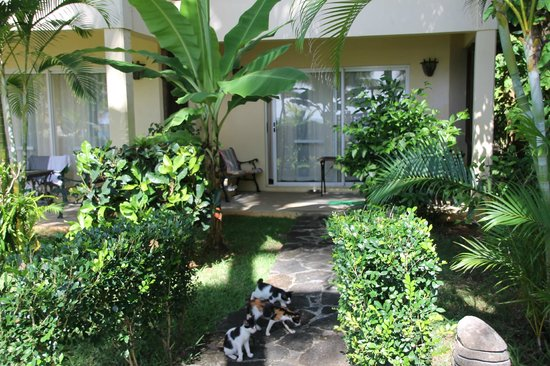 Hibiscus Beach Resort & Spa: Pathway to my room - ferals started to wait for me in the morning and evening