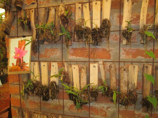 Orquideario Catasetum,Montecarlo,Misiones,Argentina