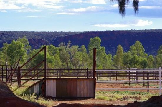 Kings Creek Station : View over the Camel Corral