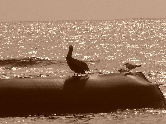 Grand Bahia Principe Coba: love the wildlife